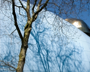 Tree, seraphim fire, Seattle, Museum of Rock, Shadow