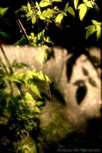 Leaf, reflection, Seraphim fire photography, Washington State, Reganb.com